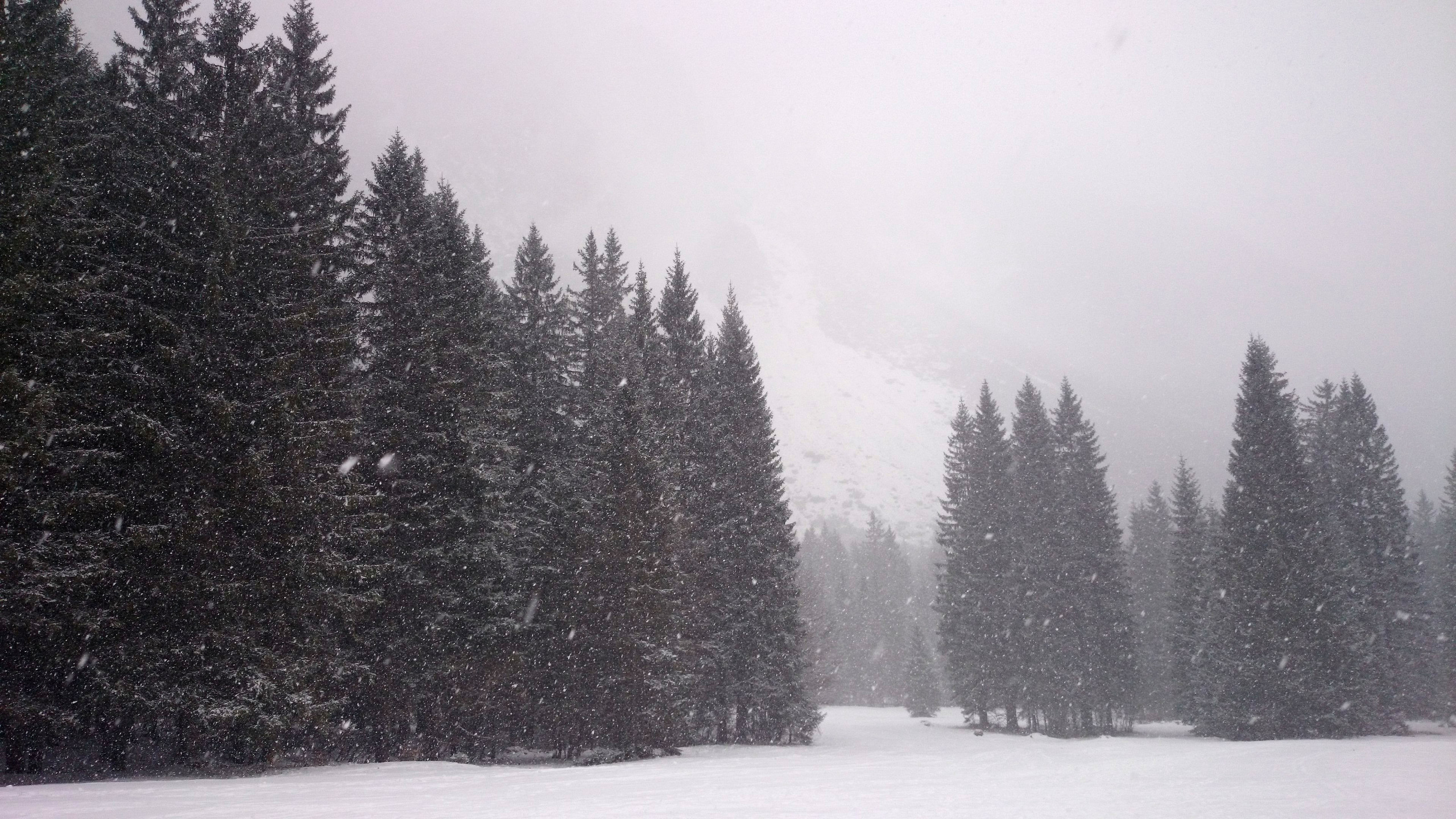 Snowy Pines Above Planica