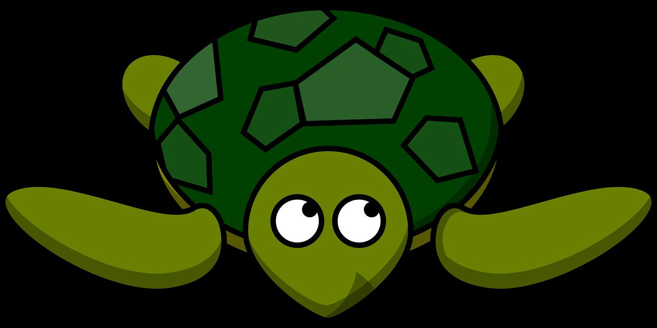 teknősbéka illusztráció